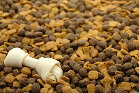 i migliori alimenti per cani alimenti animali accessori animali migliori alimenti