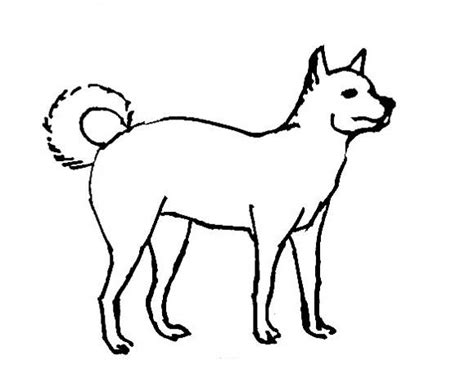 realistic dog coloring pages beagles dog breeds picture