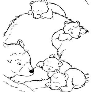 brown bear or polar coloring page pattern bear coloring