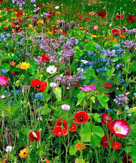 Flower Seed Mats by Seed Mat Flower Mix