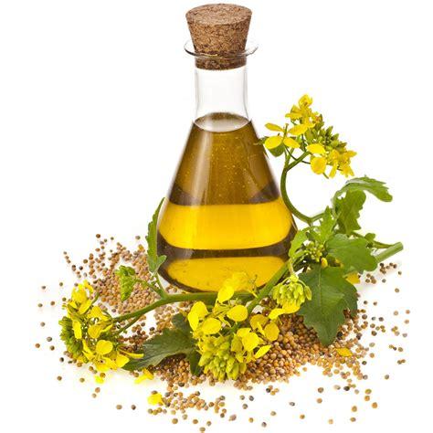 olio di colza alimentare olio di colza