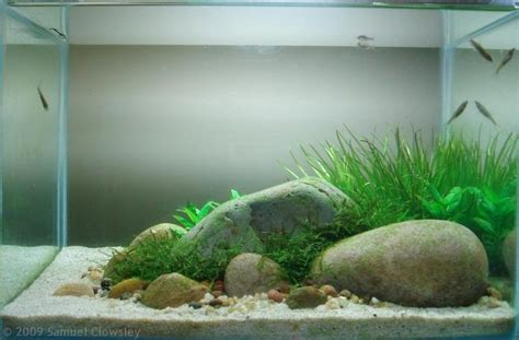 simple aquascape layout by samuel clowsley not bad aquarismo pinterest