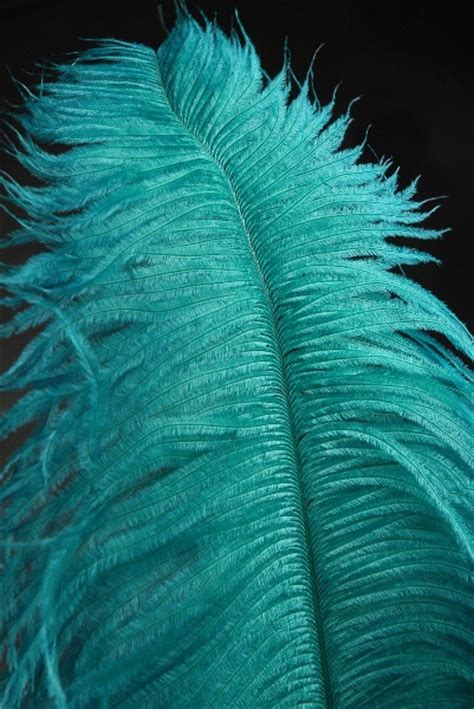 three feathers in blush teal best 20 teal ideas on pinterest turquoise pattern