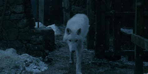 ghost actor game of thrones ghost is returning for season 8 of game of thrones and