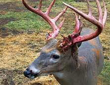 deer fml outdoors