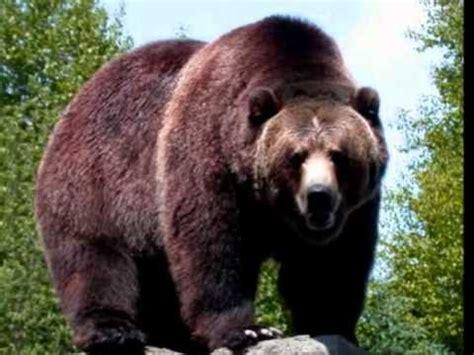 imagenes de animales carniboros los 13 animales carnivoros mas peligrosos del mundo youtube