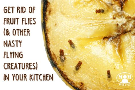How To Get Rid Of Bugs In Kitchen Cabinets How To Rid Of Annoying Fruit Flies And Gnats In The Kitchen With A Prep