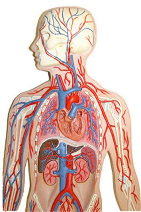 10 penyebab kelelahan kronis yang perlu diketahui artikel yudhe