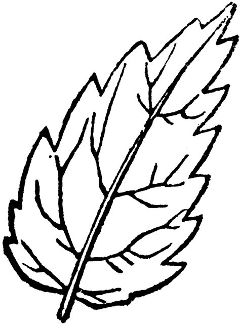 leaf outline coloring page leaf outlines coloring pages