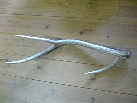axis shed horn
