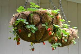 Raised Patio Planter Guest Post How To Make A Strawberry Ball Red White Amp Grew
