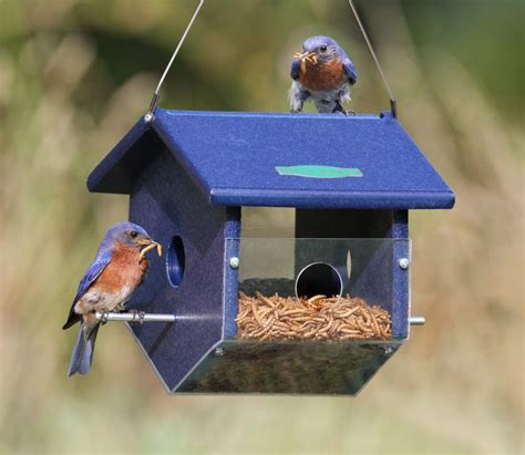 25 best ideas about bird feeding station on pinterest