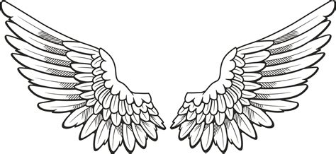 Drawing Wings by Wing Drawing At Getdrawings Free For Personal