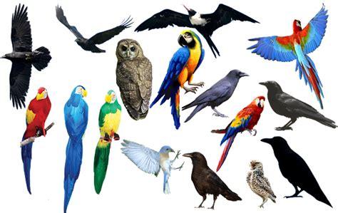 cara edit gambar format png bahan edit foto format png burung