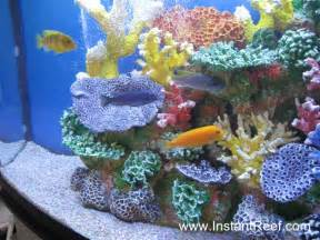 cichlids.com: Cichlid Freshwater Reef Tank with artificial corals