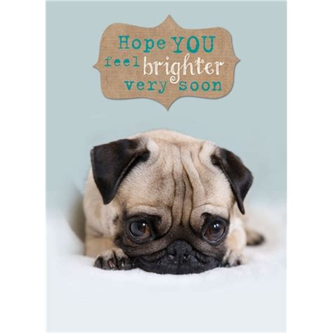 get well soon pug get well card cat buy from animal gift club