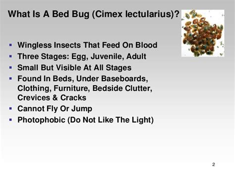 do bed bugs fly or jump bed bug ecology