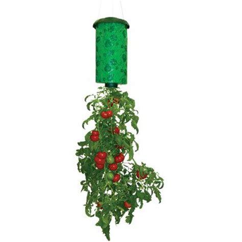 topsy turvy tomato planter infobarrel