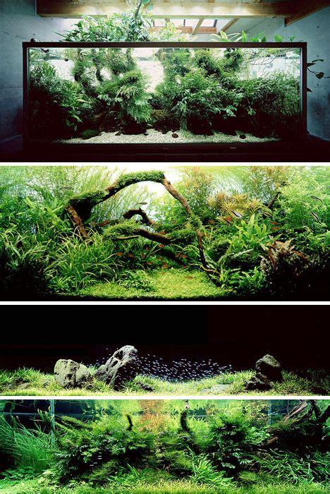 small tank aquascaping aquariums by artist takashi amano who applies principles