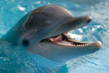 Bottlenose Dolphin - Animals Photos