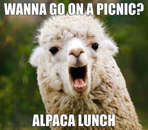 Animal Pun Meme - best 25 animal puns ideas on pinterest puns jokes
