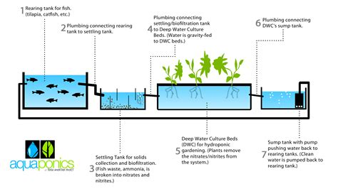 Eco Friendly House Blueprints by Aquaponics Work
