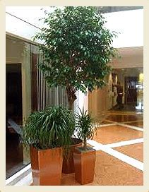 Office Plants That Don T Need Sunlight by Office Plants Sales And Maintenance In Dubai Abu Dhabi