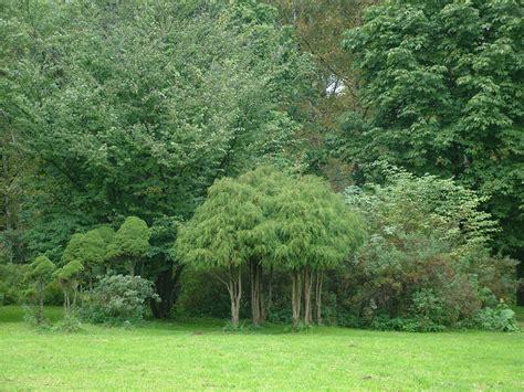 botanic garden clipart   cliparts  images