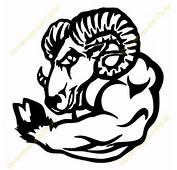 Strong Ram  11318