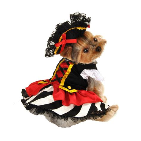 pirate costume for dogs pirate costume baxterboo