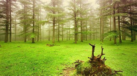 imagenes para fondo de pantalla naturaleza fondos de pantalla de naturaleza medioambiente y naturaleza