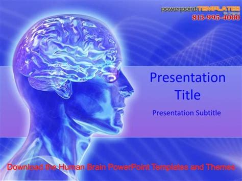 Download The Human Brain Powerpoint Templates And Themes Authorstream Brain Ppt Template