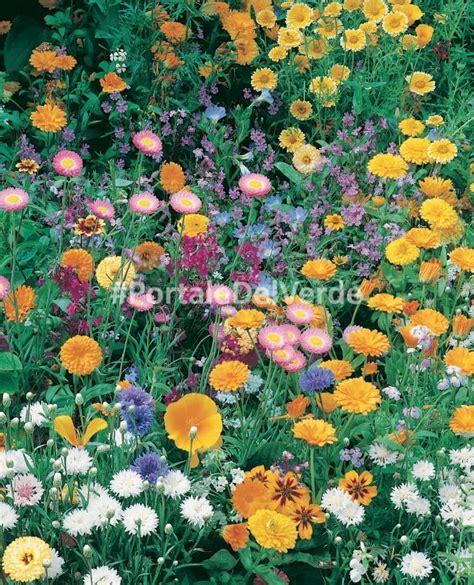 semi prato fiorito scheda botanica prato fiorito miscuglio di variet 224 mezze