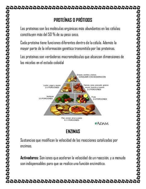 proteinas y acidos nucleicos proteinas enzimas vitaminas acidos nucleicos adn y arn