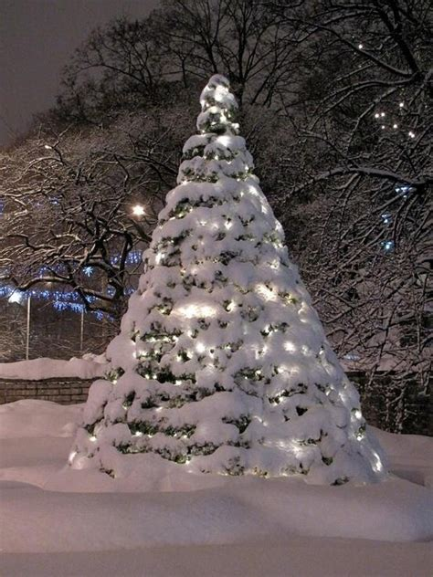snow covered christmas trees tree snow