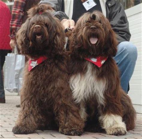 i cani testi test varie