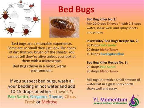 living with bed bugs best 25 thieves spray ideas on pinterest thieves