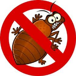 Finding Bed Bugs Bed Bug Exterminators How To Get Rid Of Bed Bugs