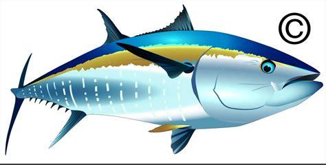 Pancing Tuna 20 gambar ikan tuna dan jenisnya 2018 gambar pedia