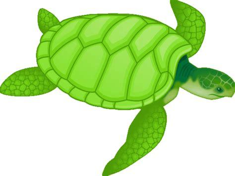 imagenes tiernas de tortugas maestra de infantil tortugas terrestres y marinas
