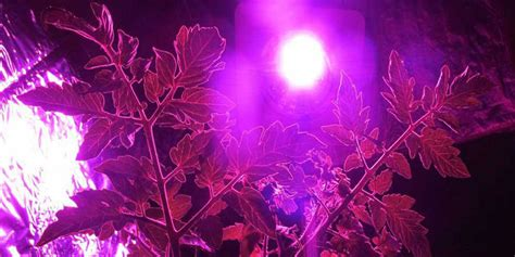 Led Ls For Growing by Hydroponic Lights Australia 28 Images Led Grow Light
