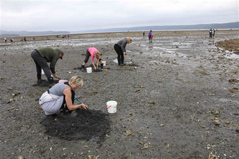 quilcene boat launch dig for your dinner on hood canal thurstontalk