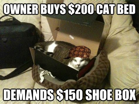 bed memes owner buys 200 cat bed demands 150 shoe box scumbag