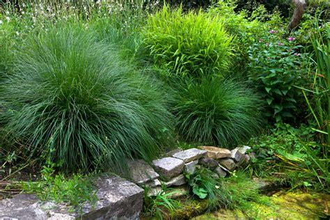 Tuin En Gras by 10 Mooiste Grassen Voor In De Tuin Intratuin