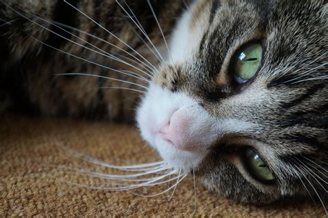 why do cats meow understand the behavior