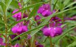 fiori di bach mal di testa 10 erbe e fiori per alleviare il mal di testa