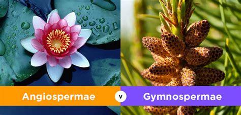 perbedaan angiospermae  gymnospermae