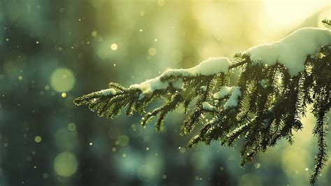 snowy tree bokeh hd wallpaper 187 fullhdwpp full hd