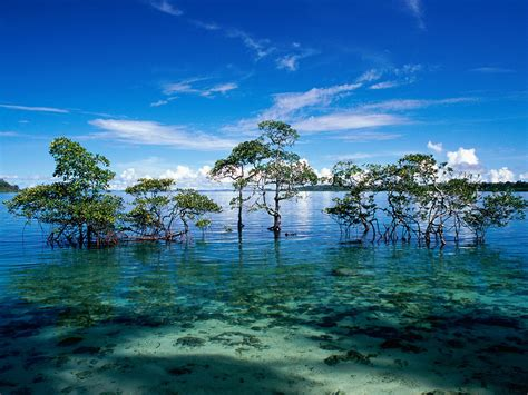 Andaman And Nicobar Island Pictures havelock island andaman and nicobar islands india picture