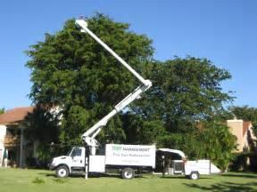 Tree Trimming Miami Tree Trimming Service In Miami Miami Tree Service